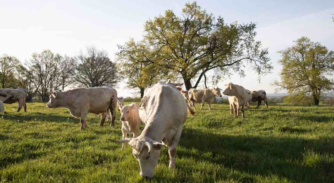 L'agroforesterie, une solution d'avenir pour des territoires durables et productifs