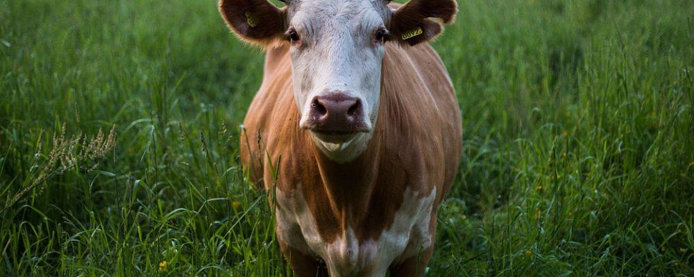Enquête agrinautes: les agriculteurs & Internet
