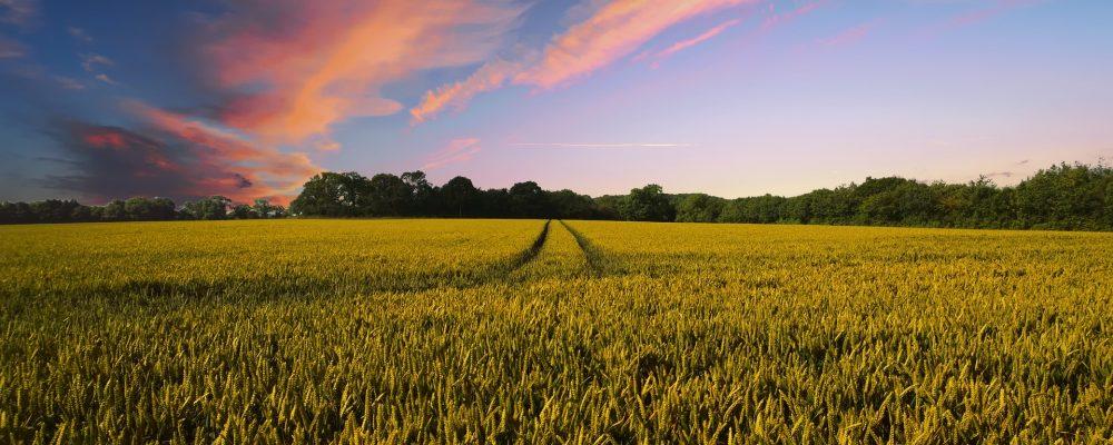 Et si on restructurait les fermes ?