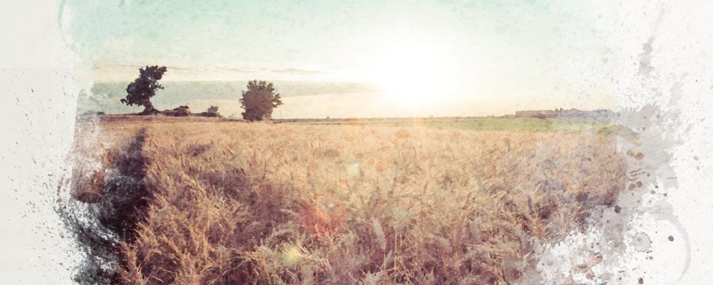 [EN LIGNE] Refonder l'agriculture à l'heure de l'Anthropocène : un nouveau regard sur l'entreprise agricole